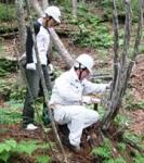 2013草津やすらぎの森整備事業�A